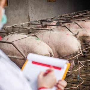 アジア圏で拡大中の豚コレラがオーストラリアにも影響を