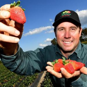 イチゴを買ってイチゴ農家を救おう!