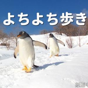 よちよち歩きがイイんです!!