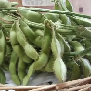 8日おすすめは黒豆の枝豆