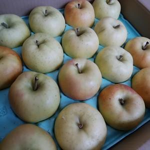 糖度15のとても甘いりんご入荷