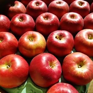 有機りんご紅玉入荷しました