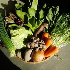 土曜日は北海道人参、佐賀蓮根、三保朝採り野菜入荷