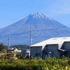 富士山麓の朝採り無農薬野菜&きのこ