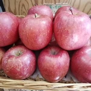 糖度14のりんごと三保の朝採り潮野菜