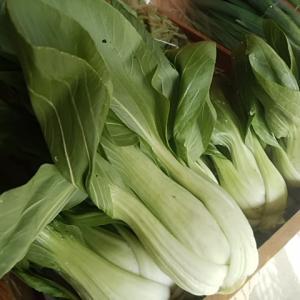 芝川の富士山麓野菜入荷