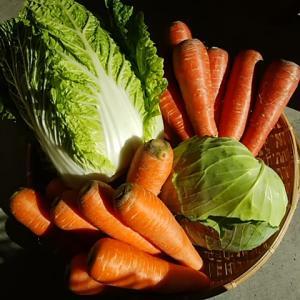 京都の無農薬野菜入荷