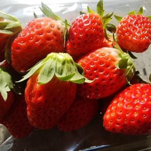 甘くて酸味少なめ食べやすい苺