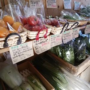 24日は朝採り潮野菜盛りだくさん