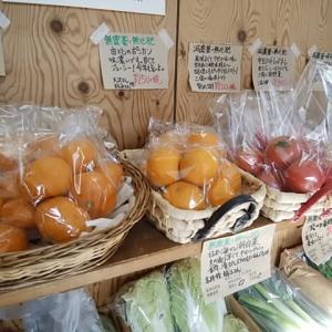 超濃厚みかんとポンカン、フルーツトマト