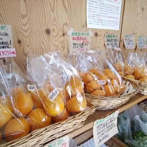 柑橘で免疫力を上げる 感染症対策になる栄養がたっぷり