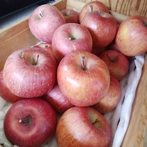 糖度新記録 驚きの甘さ 強烈な香り 農家直送りんご入荷