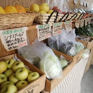 新鮮 採れたて 夏の無農薬野菜が盛りだくさん