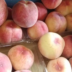 どぎつい甘さの完熟桃 今季最後のびわ 16日は野菜に果物おすすめたくさん