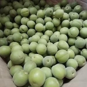 今年の無農薬梅 梅ジュースに仕込み 暑さ対策に絶対必要