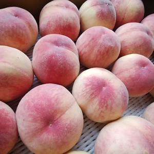 4日は甘くて柔らかい完熟桃がたくさん入荷 雨にも負けず土曜日営業します