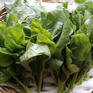 夏に欠かせない葉物 美容効果、免疫アップ、骨を丈夫にする つるむらさき入荷