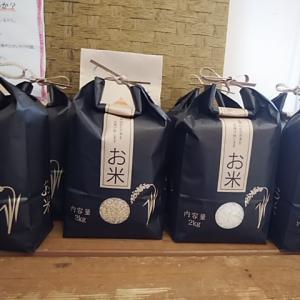 甘くてつやつやでもちもち 旨みの熟成米 無農薬栽培こしひかり白米玄米 入荷完了