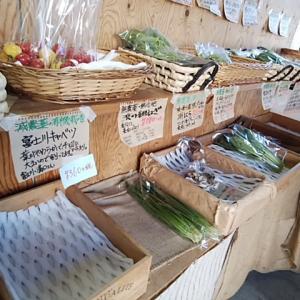 今日入荷の野菜 完売が出ています
