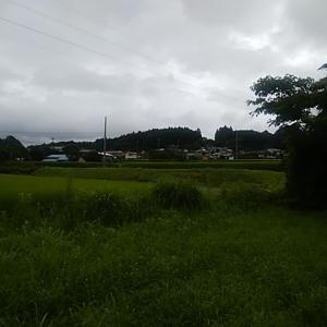 富士山麓の無農薬野菜 仕入れてきました 7月はずっと富士山が見えない