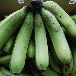 13日入荷 人気の国産無農薬バナナが到着 もちもち食感 尋常じゃない甘さ