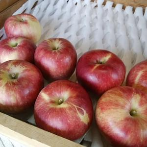 4日入荷 りんご好きのみなさん お待たせしました 夏リンゴです