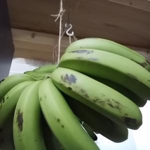 バナナ入荷 2本か3本で販売します