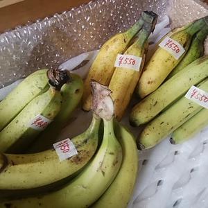 国産バナナ完売 今年最後の販売 ありがとうございます