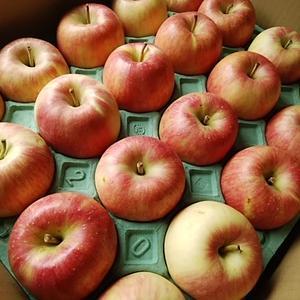りんごとレンコンお騒がせしました
