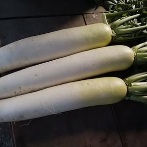 浜育ちの潮野菜 市場に出ない野菜を直接仕入れ これがフィールのやり方