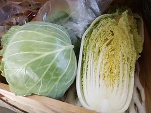 盛りだくさん 地元の朝採り潮野菜 新鮮野菜がたくさん入荷
