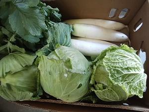 木曜日は12時オープン 富士山麓や三保から 朝採りの新鮮な野菜がたくさん入荷