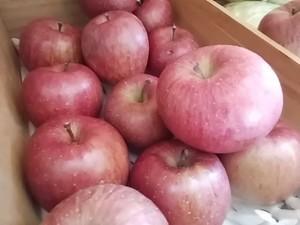 糖度15 甘味増してる有機りんご入荷 午前中ブログで入荷状況チェックしてみてね
