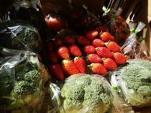朝採り新鮮な地物野菜 通常入荷しています