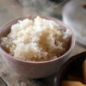 もちもち 柔らかい 甘い 無農薬米こしひかり白米 精米したて鮮度抜群