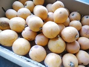 由比びわまもなく終了 完熟桃が甘味絶好調 朝採り野菜もたくさん入荷する火曜日