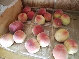 食べ頃の完熟桃入荷中 トマト、枝豆、ズッキーニなど実野菜がおすすめ