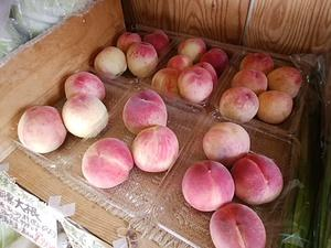 朝採りの完熟桃入荷 鮮度抜群な桃ですよ