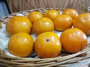 今年初入荷 初物の柿 りんごつがる再入荷 地物朝採り新鮮野菜がたくさん入荷