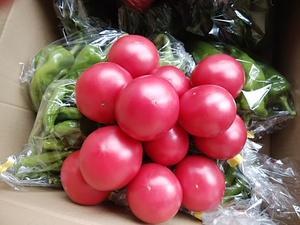 朝霧高原 完熟トマト 久しぶりにたくさん来週入荷