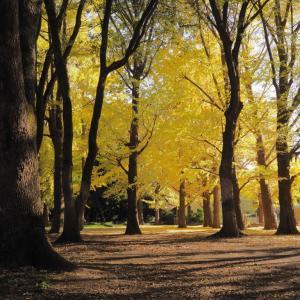代々木公園の紅葉 その2