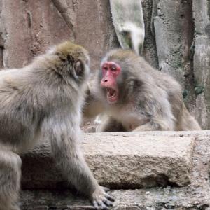 サルの喧嘩