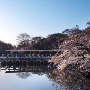 桜 2021 井の頭公園
