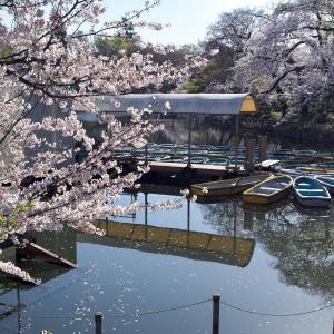 桜 2021 井の頭公園 その2