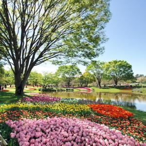 昭和記念公園のチューリップ その2