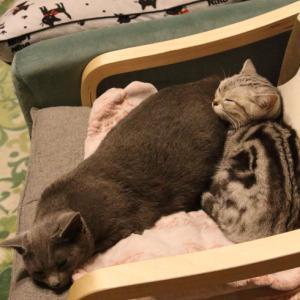 けつ枕で安心。