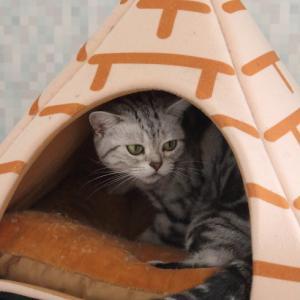 三角テント。