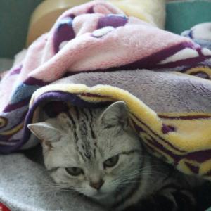 毛布からダンボール。