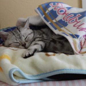 かかえこみ寝。