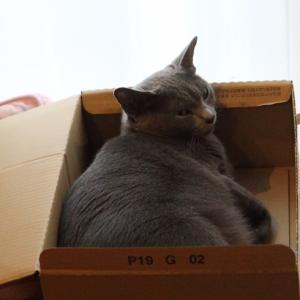 箱ニャンコ。